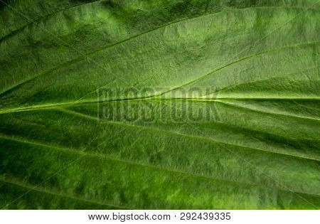 Freshness Tropical Leaves Surface As Rife Forest Background