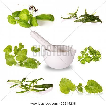 Collection of herbs with grinder, isolated on white background