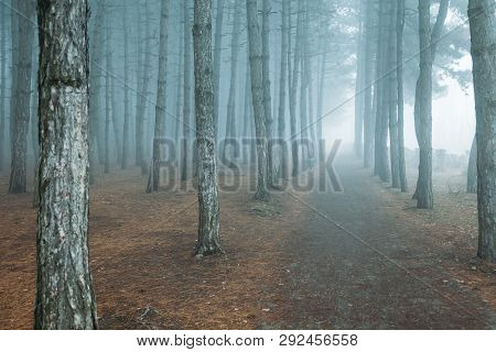 Forest In The Fog. Misty Dark Forest