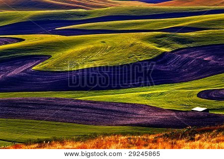 Green Wheat Fields Black Fallow Land Patterns And Farms From Steptoe Butte Palouse Washington State