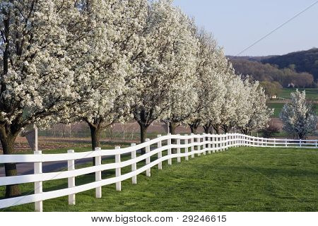 Spring Season Bloom