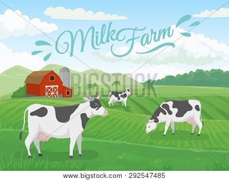 Milk Farm Field. Dairy Farms Landscape, Cow On Ranch Fields And Country Farming Cows Vector Illustra