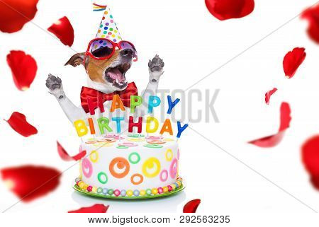 Jack Russell Dog  As A Surprise, Singing Birthday Song  Like Karaoke With Microphone ,behind Funny C