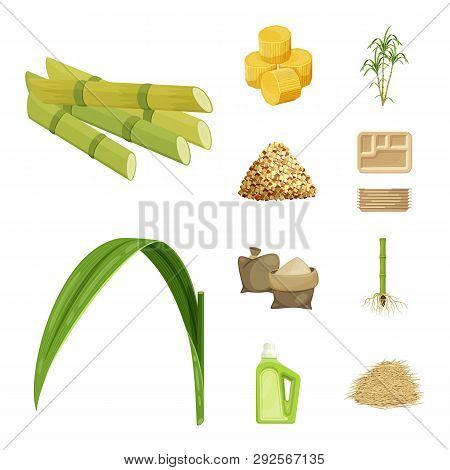 Vector Illustration Of Sugarcane And Cane Sign. Collection Of Sugarcane And Field Vector Icon For St