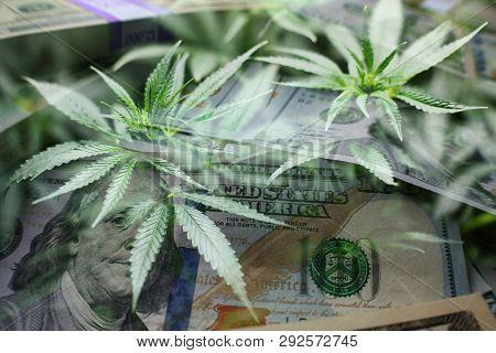 Marijuana Industry Profits With Hundreds & Marijuana Leaves High Quality Stock Photo