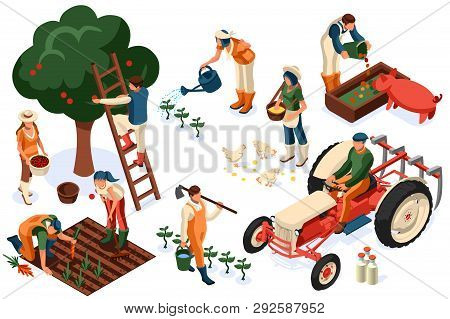 Flat Tractor Set. Farmer, Agricultural Worker With Plant, Chicken, Sheep, Rabbit, Cow, Milk, Fruit O