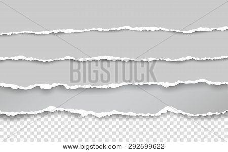 Horizontal Torn Paper Edge. Ripped Squared Horizontal White Paper Strips. Vector Illustration.