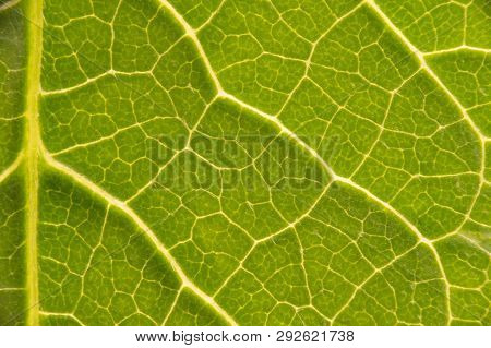 Green Leaf Structure Vein Lamina Macro Closeup