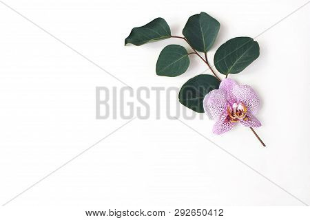Styled Stock Photo. Jungle Floral Composition Of Eucalyptus Branch And Pink Phalenopsis Orchid Flowe