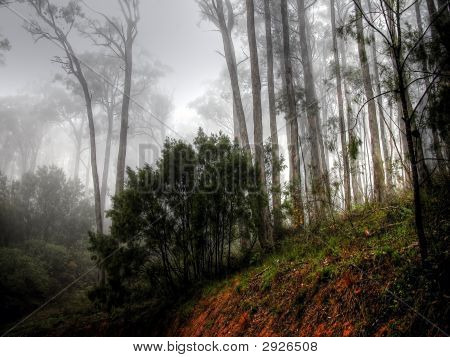 Misty Forest Ii