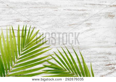 Green Leaves Of Palm Tree On White Wood Wall