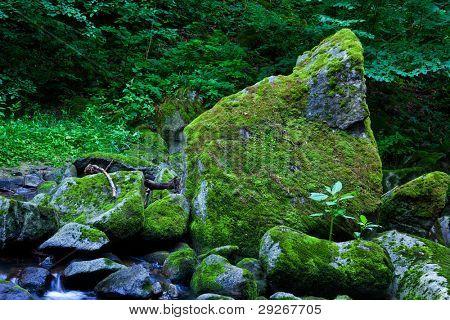 Creek mit Wasser und Steinen in den Bergen.