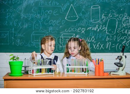 Girls On School Chemistry Lesson. School Laboratory Partners. Kids Busy With Experiment. Test Tubes