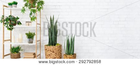 Rack With House Plants, Books At White Brick Wall Background, Copy Space. Decorative Home Plants Con