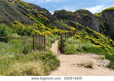 Trailhead At Point Dume In Malibu California Leads Up To A Bluff Overlook. Giant Coreopsis Wildflowe