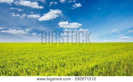 Splendid green field with white fluffy clouds. Location place Ukraine, Europe. Scenic image of agrarian industry concept. Fresh seasonal background. Perfect wallpaper. Discover the beauty of earth.