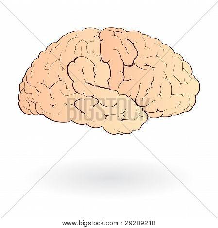 isolated human brain vector