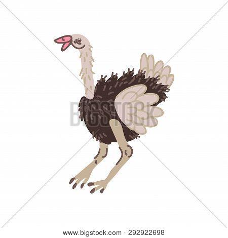 Ostrich Wild Exotic African Bird Vector Illustration