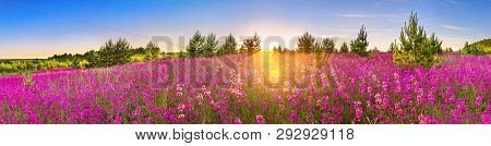 Beautiful Spring Landscape Panorama With Flowering Flowers In Meadow And Sunrise. Panoramic View Of