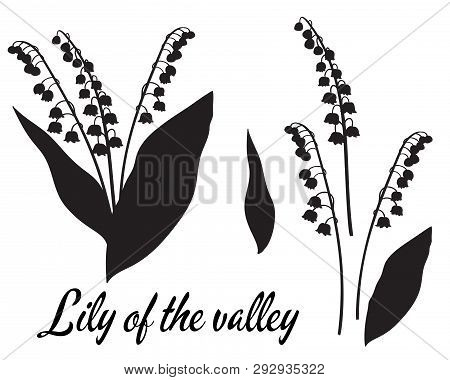 Silhouette Of Lilly Of The Valley Flower. Bouquet Of Lillies Of The Valley. Leaves And Head Of A Flo