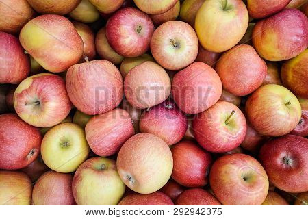 Red And Yellow Apples Background. Fresh Apples Variety Grown In The Shop. Apple Suitable For Juice,