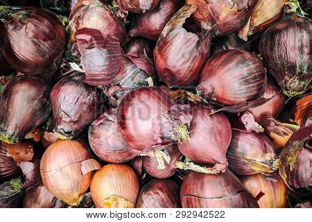 Purple Onion Background. Fresh Onion  Variety Grown In The Shop. Purple Onion For Salad, Entree And