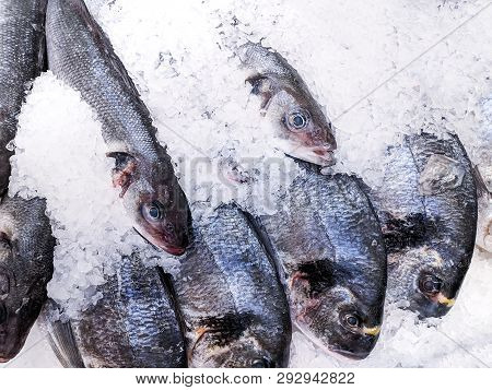 Close Up, Fresh Organic Fishes: Sea Bream And Sea Bass On Ice On Fresh Market,  Background. Sea Fish
