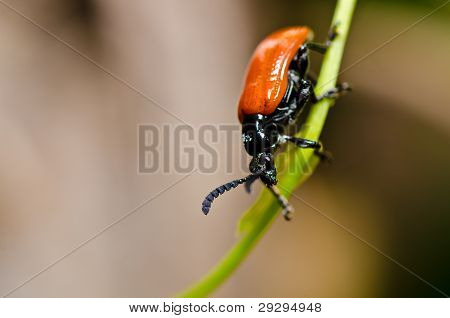 Red Bug In Green Nature