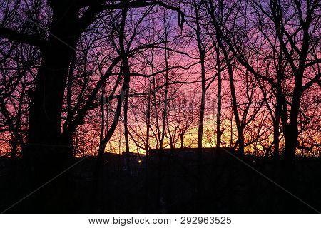 Violet Red Dawn Sky. Silhouette Of Trees Without Leaves. Early Dawn In March.