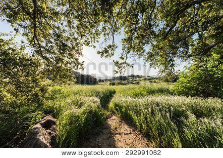 Santa Susana Pass State Historic Park Oak Grove meadow sunrise near Porter Ranch and the San Fernando Valley in Los Angeles, California.