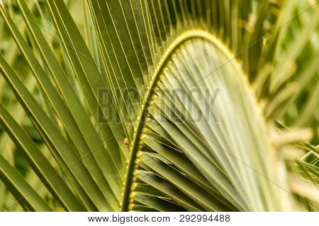 Close Up Of Palm Tree Leaves In Perspective