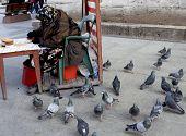 Elderly woman feeding the birds in a park in Turkey poster