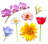 Flower vector set. Orchid, tulip, chamomile, lily, bluebell and daisy poster