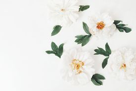 White Peony Flower Heads And Leaves Isolated On White Table Background. Flat Lay, Top View. Floral P
