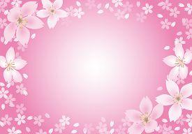 Pink Sakura Flower Frame On A Pink Background