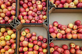 Red And Yellow Apples In Box,  Background. Fresh Apples Variety Grown In The Shop. Apple Suitable Fo