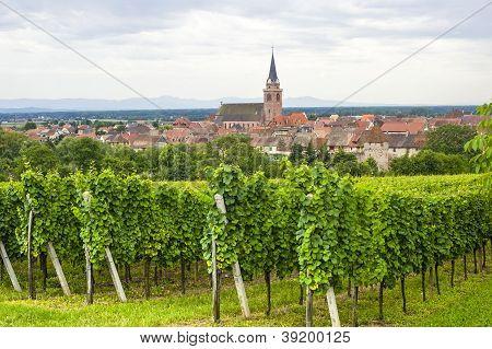 Bergheim (Alsacia) - Panorama con viñedo