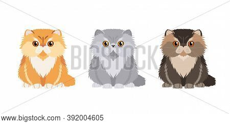 Set Of Illustrations Of Three Persian Cats In Different Colors. Vector Cats Collection For Your Desi
