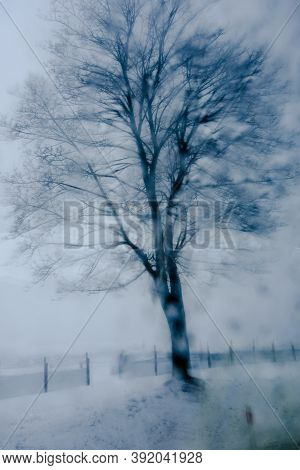 Winter Landscape With Frosty Tree Covered In Snow. Photo Impressionism Effect