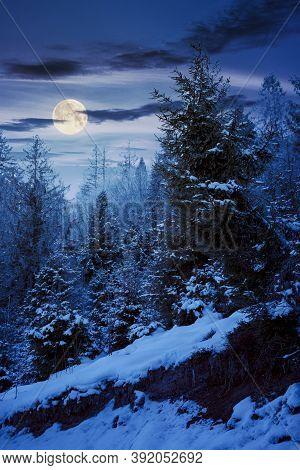Forest On A Misty Night. Trees In Hoarfrost. Beautiful Winter Scenery In Foggy Weather In Full Moon