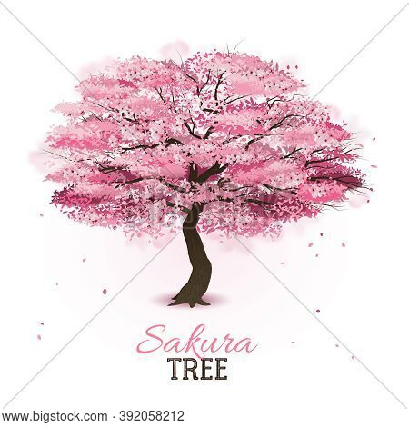 Realistic Pink Blossoming Spring Japanese Sakura Cherry Tree Vector Illustration