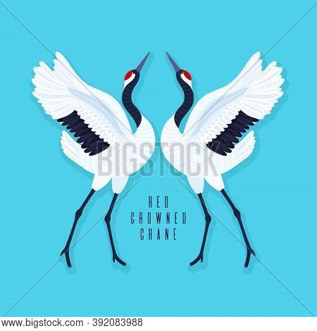 Pair Of Red Crowned Cranes And Heart. Blue Background With Dancing East Asian Birds. Endangered Spec