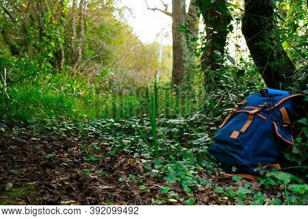 Blue Backpack With Blue Binoculars Over It, Backed On A Tree, In The Middle Of The Forest, On A Expl