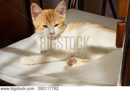 Little Cream Kitten Sleeping On A Blanketa Cute Little Red Kitten Is Lying In The Sun On A Chair. Ou