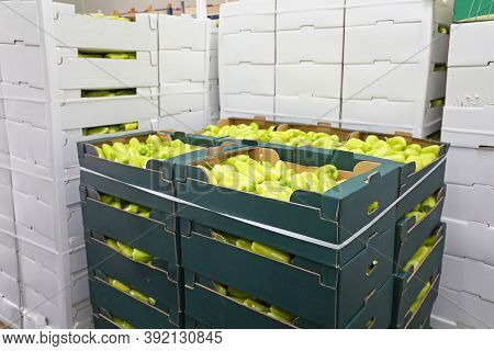 Green Peppers In Boxes Food Storage Warehouse