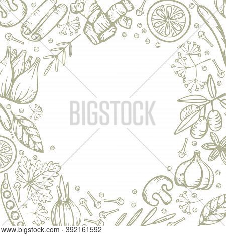 Spice Herbs For Delicious And Healthy Cooking.   Vector Round Border On White Background. Stylized H