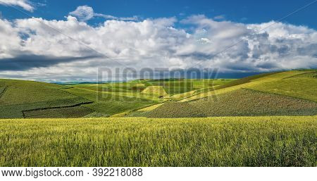 Fields Of Wheat Crops, Fields Of Rice Cultivation At Sunset, Fields Of Corn Crops