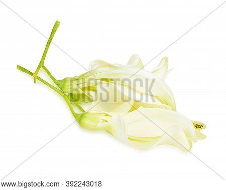 Fresh Sesbania Grandiflora On A White Background