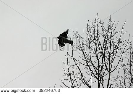 A Crow Flew Up From The Tree
