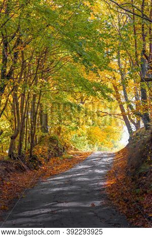 Road In The Autumn Forest. Autumn Landscape.